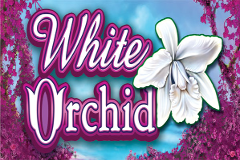 Free Slot White Orchid